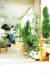 실내 공기 오염을 줄이기 위해서는 천연 공기정화기인 식물을 기르거나 자주 환기를 해야 한다.[중앙포토]