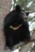 지리산 반달가슴곰. [사진 국립공원관리공단]
