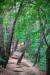 칠갑산 자락에는 소나무가 많아 솔바람길로 통하는 길이 많다. [사진 한국관광공사]