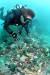 제주도 서귀포시 정방폭포 인근 자구리 바닷속에 쌓인 페트병 등 쓰레기를 다이버가 둘러보고 있다. [사진 수중세계 이선명 소장]