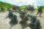 지난해 경북 포항시 장기면 수성리 해병대 훈련장에서 실시된 한·미 해병대 연합 공지전투훈련. [중앙포토]
