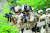 지난 4월 25일 인천 국제평화지원단에서 아랍에미리트(UAE) 파병 부대인 아크 부대 14진 대원들이 워리어 플랫폼을 착용한 뒤 건물 침투 작전을 선보이고 있다. 특수임무여단(참수부대)는 아크 부대보다 좀 더 나은 장비를 갖췄다. [사진 육군]