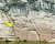 대곡천 수위에 따른 암각화 모습. 3분의 1 정도 잠겼을 때(11월 초). [연합뉴스]