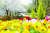정부가 사회적 거리두기 지침을 완화하면서 22일부터 국립 자연휴양림과 수목원 등이 다시 문을 열었다. 개방 공간은 등산로와 산책로 등 야외 공간으로 한정되어 숙박시설은 이용할 수 없다. 이날 인천 강화군 석모도 수목원에서 시민들이 산책을 즐기고 있다. [뉴스1]