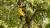 28일 오후 둥지를 틀었던 참나무 주변 나무에서 꾀꼬리 어미가 사라진 새끼 2마리와 둥지를 찾아 두리번거리고 있다. [연천지역사랑실천연대 제공]