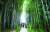대전시 소제동에는 정겨운 골목길이 30개 넘게 남아 있다. 대나무 사이에 펼쳐진 골목길이 시원스럽다. 권혁재 사진전문기자