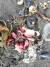 지난 5일 러시아 극동 지역 캄차카주 인근 해안으로 밀려온 해양 생물 사체들. [로이터=연합뉴스]