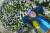 '국화의 아버지'로 불리는 인천시 검암동 국야농원 이재경 대표. 우리 산하에 피고 지는 들국화에 매료돼 지난 40여 년을 품종 개량에 힘써왔다.