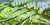 도시재생 사업으로 추진 중인 서울시 신내 컴팩트 시티 조감도. 도로와 공원·아파트 등을 연결했다. [사진 각 건축사무소]