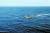 미국의 핵잠인 애슈빌함(오른쪽)이 프랑스가 중국을 견제하기 위해 태평양에 배치한 핵잠인 에머호드함과 훈련을 벌이고 있다. [사진 미 해군]