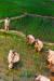 모내기를 하는 조선 시대 농촌의 풍경.  [사진제공=우상조 인턴기자]