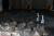 경기 이천시 쿠팡 덕평물류센터 화재 현장에서 지난 6월 29일 오전 경찰과 경기도소방재난본부, 국립과학수사연구원 등 관계자들이 화재 원인을 찾기 위한 합동 감식을 하고 있다. 연합뉴스