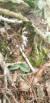 울산에서 발견된 '구름병아리난초'. [사진 울산시]