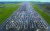 지난해 12월 프랑스가 변종 바이러스를 막기 위해 영국발 입국을 금지하자 영국 남동부 맨스턴 공항 활주로에 컨테이너 트럭들이 빼곡하다. [AFP]