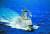 지난 4월 청해부대 34진 문무대왕함이 대형 태극기를 휘날리며 바레인을 향해 항해하고 있다. 합동참모본부