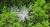 잿빛으로 말라 죽은 분비나무를 하늘에서 본 모습. [사진 녹색연합]