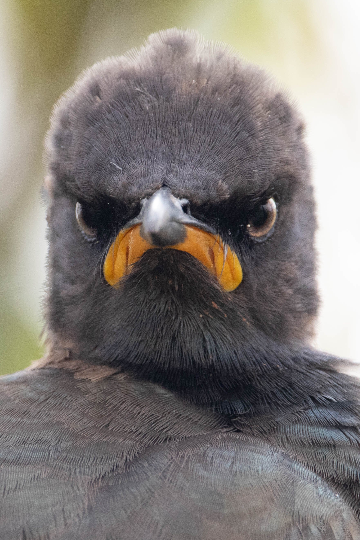 """남아프리카 리엣블레이 자연보호구역에서 포착된 화난 찌레르기. 작가는 """"월요일 아침 자신의 얼굴표정""""이라고 표현했다. [©Andrew Mayes/Comedywildlifephoto.com]"""