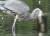 지난6일(현지시간) 미국 뉴욕 센트럴파크의 호수에서 왜가리가 죽은 쥐를 잡아 먹는 모습. [트위터 @BirdCentralPark캡처]