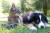잔디 위에 나란히 앉아있는 개와 고양이. 해당 개와 고양이는 본 기사와 무관함. [사진 Unsplash]