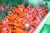 미국 머크사가 코로나19 치료제로 개발 중인 항바이러스제 몰누피라비르. [AP=연합뉴스]