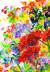 기억 나시나요? 9월21일자 지면에 실은 그림. SNS 친구들에게 좋아하는 꽃을 신청받아 그렸다.