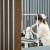 '소노캄 고양'은 지난해 호텔 일부를 반려견 복합문화공간으로 선보여 화제를 모았다. 사진은 이 호텔의 펫 전용 미용실. [사진 라이프앤도그]